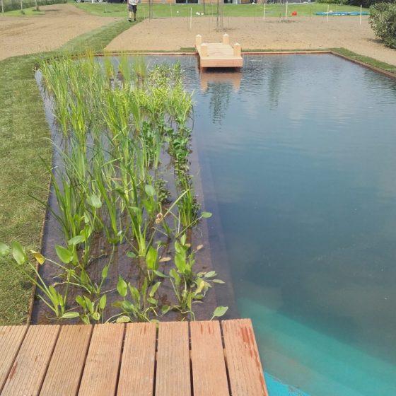 Vijverbeplanting naast zwemvijver in Doetinchem