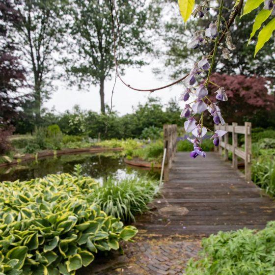 bloem en houten loopbrug