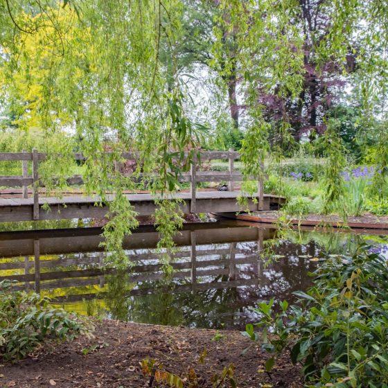 natuurlijke tuin met vijver