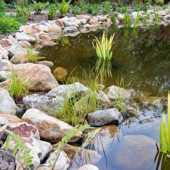 vijverbeplanting natuurlijke zwemvijver