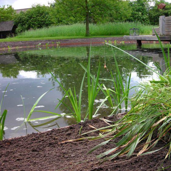zwemvijver met beplanting en oever