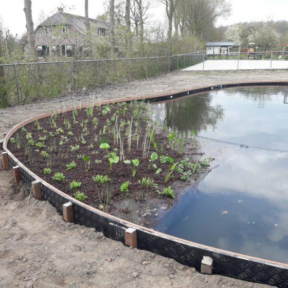 zwemvijver aanleggen beplanting